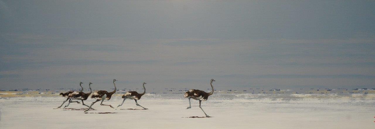 Etosha Speedbirds