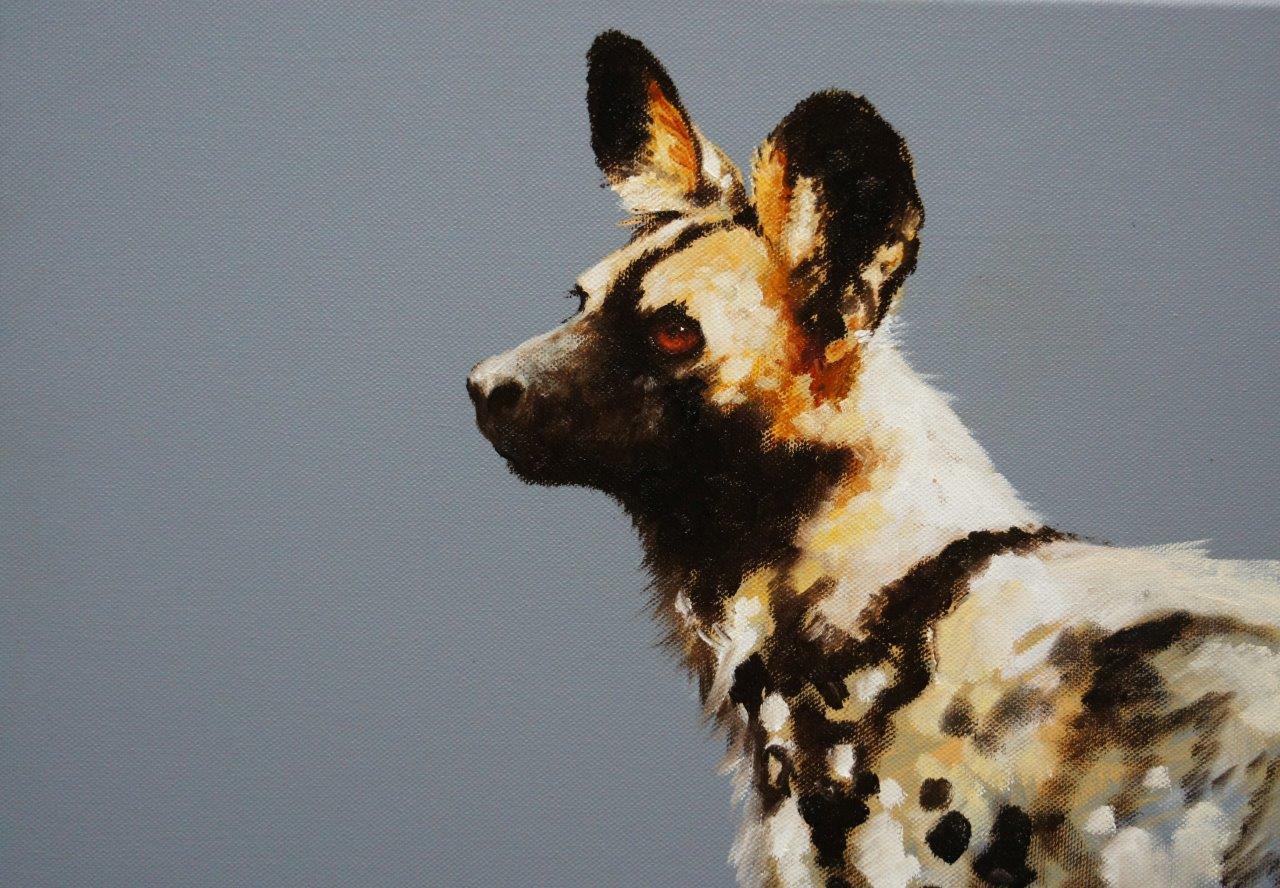 Wild dog portrait